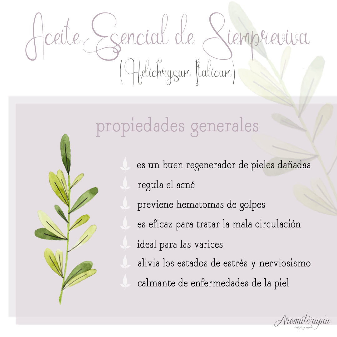 by naturals aromaterapia aceite esencial siempreviva remedios naturales